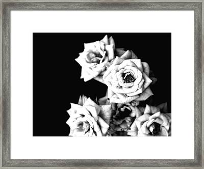 Framed Print featuring the photograph Weeping Roses by Rachel Mirror
