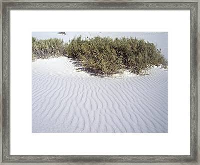 Weeping Sage Framed Print by The GYPSY And DEBBIE