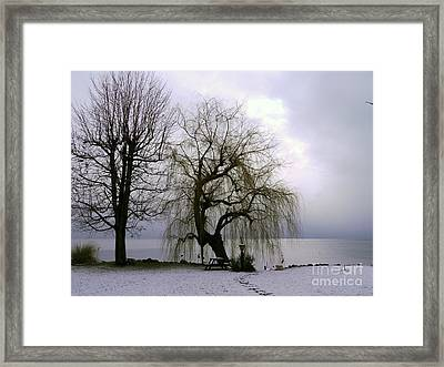 Weeping Willow By Lake Geneva Framed Print by Adam Sylvester