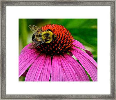 Weeping Willow Flower Framed Print