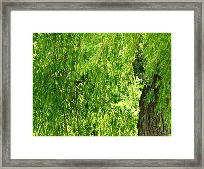 Weeping Willow Green Framed Print by Will Borden