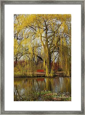 Weeping Willow  Framed Print by Isabel Poulin