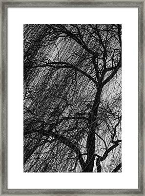 Weeping Willow Framed Print by Robert Hebert
