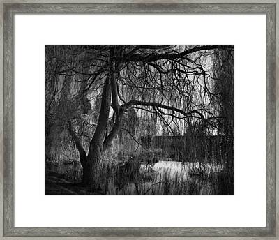 Weeping Willow Tree Framed Print by Ian Barber
