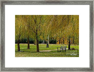 Weeping Willow Tree Landscape Framed Print by Carol F Austin