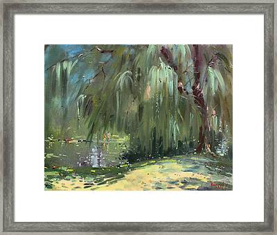 Weeping Willow Tree Framed Print by Ylli Haruni