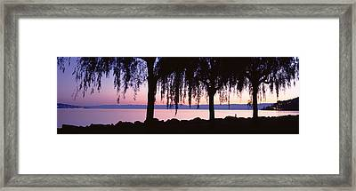 Weeping Willows, Lake Geneva, St Framed Print