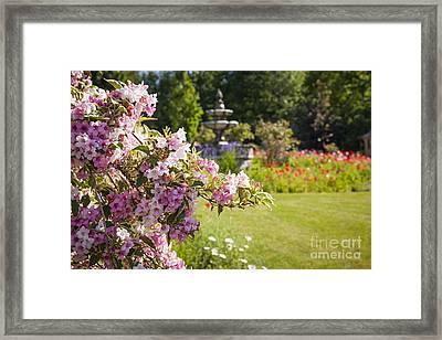 Weigela In June Garden Framed Print