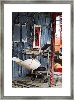 Weighing Up Framed Print by Paula Rountree Bischoff