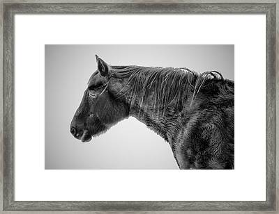 Weight Of The Season Framed Print by Nathan Larson