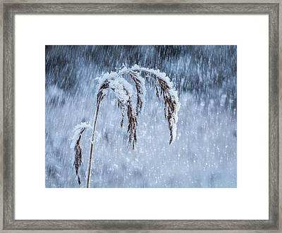 Weight Of Winter Framed Print by Janne Mankinen
