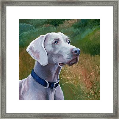 Weimaraner Dog Framed Print by Alice Leggett