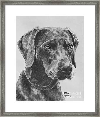 Weimaraner Drawn In Charcoal Framed Print