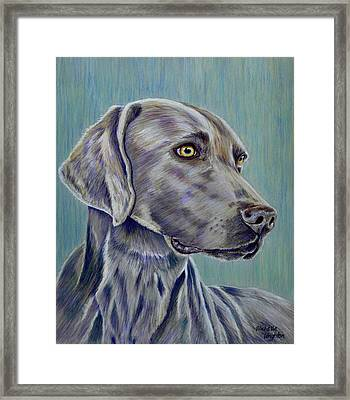 Weimaraner Grey Ghost Framed Print by Michelle Wrighton