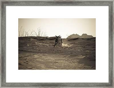 Weimaraner II - Lake Powell Framed Print by Julie Niemela