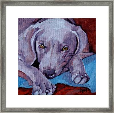 Framed Print featuring the painting Weimaraner by Pattie Wall