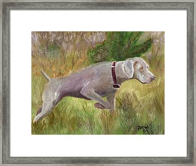 Weimaraner Point Framed Print