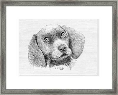 Weimaraner Puppy Framed Print