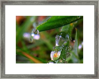 Weird Drops Framed Print by Suzy Piatt