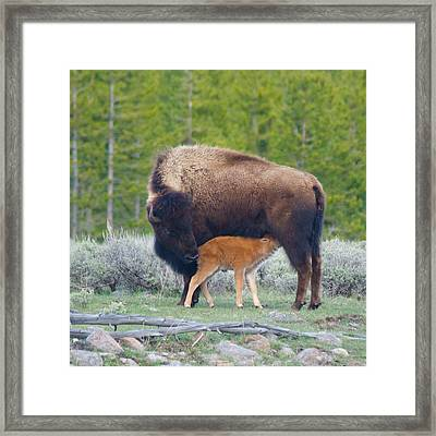 Welcome Baby Framed Print by Bob Smithing