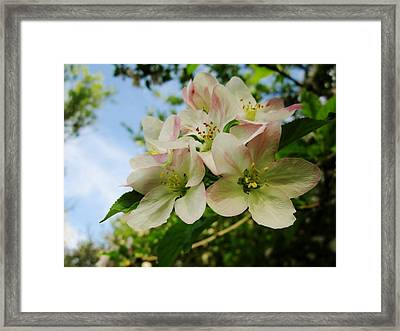 Welcome Blossoms Framed Print