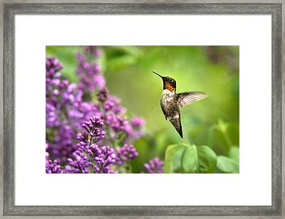 Welcome Home Hummingbird Framed Print