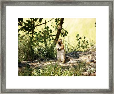 Welcome Framed Print by Michelle Bentham