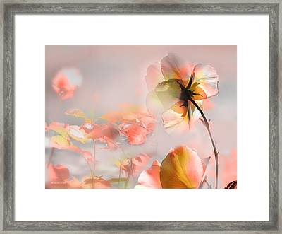 Welcome Summer Framed Print by Alfonso Garcia