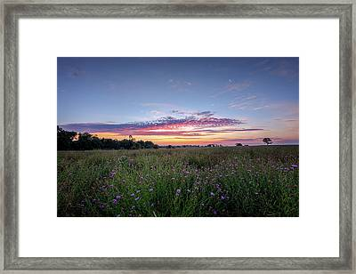 Welcome To My Morning Framed Print by Bill Wakeley