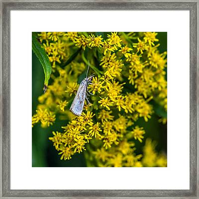 Welcome To My World 2 Framed Print