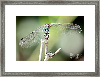 Welcome To My World Framed Print by Carol Groenen
