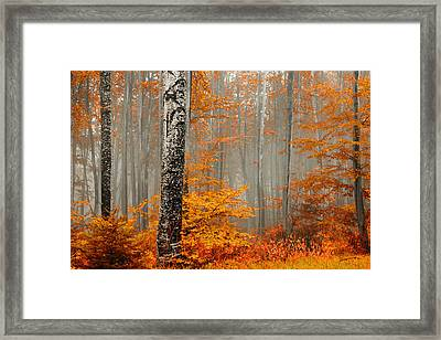 Welcome To Orange Forest Framed Print by Evgeni Dinev
