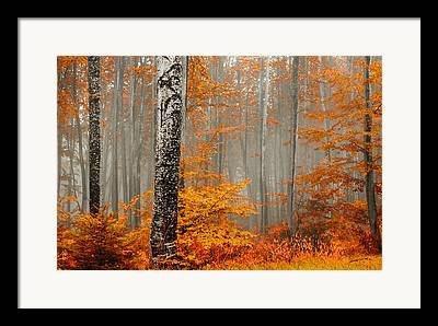 Rhodope Mountains Framed Prints