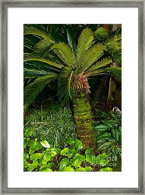Welcome To The Tropics Framed Print