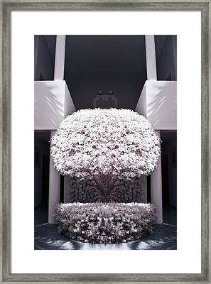 Welcome Tree Infrared Framed Print by Adam Romanowicz