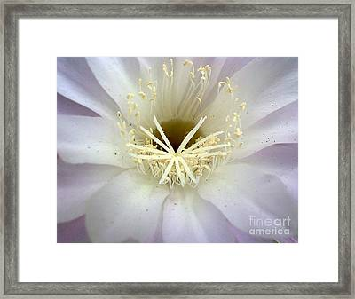 Welcoming Framed Print by Chris Anderson