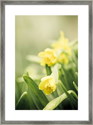 Welcoming Spring Framed Print by Carolyn Cochrane