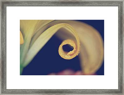 We'll Curl Up Together Framed Print by Laurie Search