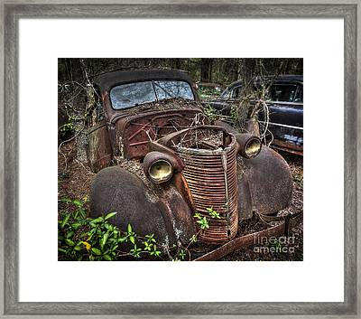 Well Grounded Framed Print