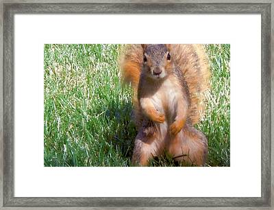 Well Hello There Framed Print by Barb Baker