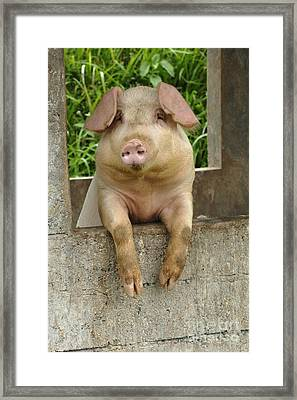 Well Hello There Framed Print by Bob Christopher