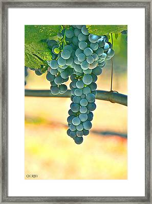 Well Hung Vine Framed Print by Lorella  Schoales