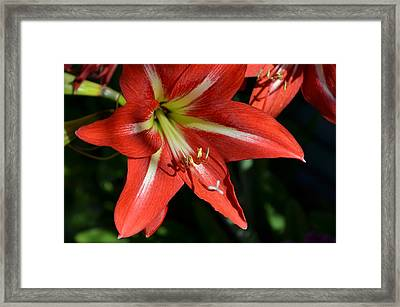 Well Red Framed Print