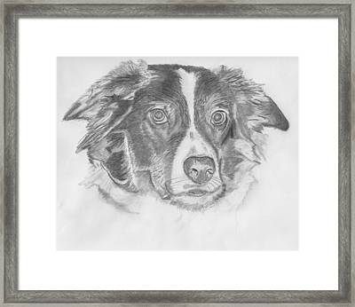 Welsh Border Collie Framed Print by Catherine Roberts
