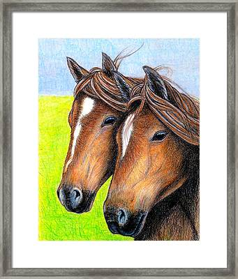 Welsh Mountain Ponies Framed Print