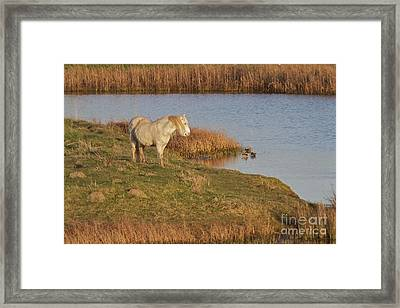 Framed Print featuring the photograph Welsh Pony  by Gary Bridger