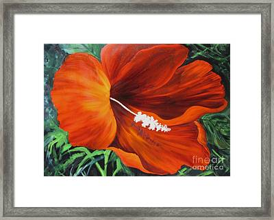 Wendy's Red Hibiscus Framed Print