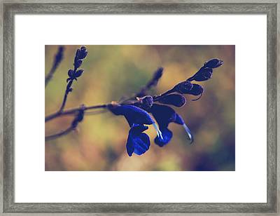 We're Two Of A Kind Framed Print by Laurie Search