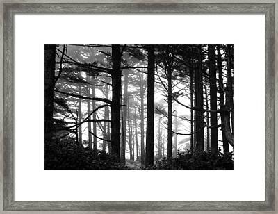 West Coast Trees Framed Print