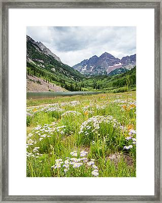 West Elk Wildflowers Framed Print